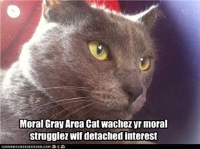 Moral Gray Area Cat wachez yr moral strugglez wif detached interest