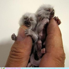 Finger-Sized Squeeness