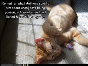 No matter what Anthony said to him about oranj cats being poysun, Bob went ahead and licked his own fur anyway.
