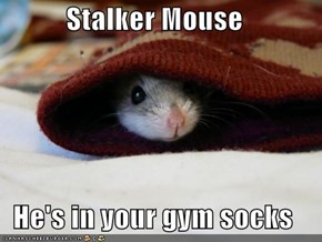 Stalker Mouse  He's in your gym socks