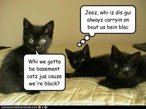 Whi we gotta be basement catz jus cauze we're black?