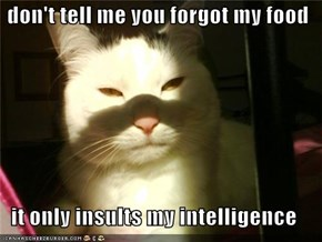 don't tell me you forgot my food  it only insults my intelligence