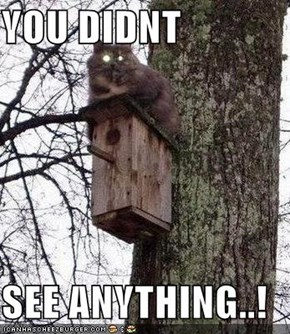 YOU DIDNT  SEE ANYTHING..!