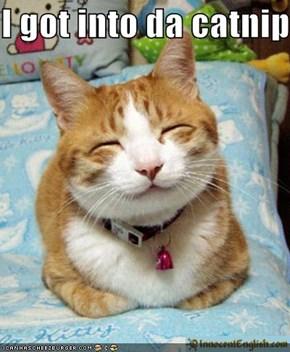 I got into da catnip
