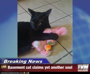 Breaking News - Basement cat claims yet another soul
