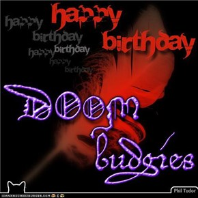 Happy Birthday DOOMbudgies . . . . . . . . . . . . . . . . . . . .