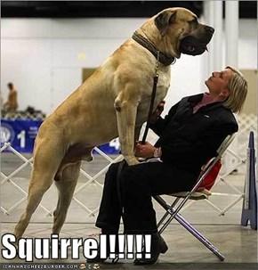 Squirrel!!!!!