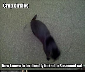 Crop circles: now known to be directly linked to Basement cat.
