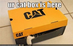 ur cat box is here