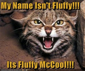 My Name Isn't Fluffy!!!  Its Fluffy McCool!!!