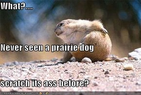 What?.... Never seen a prairie dog scratch its ass before?