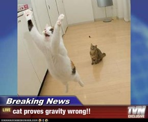 Breaking News - cat proves gravity wrong!!
