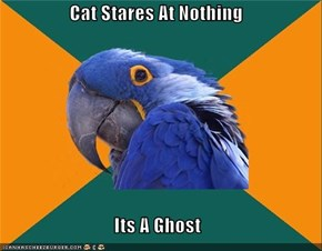 Paranoid Parrot: Paranoidal Activity