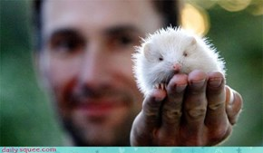 Albino Hedgehog Acquired!