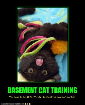 BASEMENT CAT TRAINING