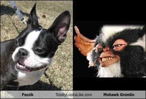 Fezzik Totally Looks Like Mohawk Gremlin