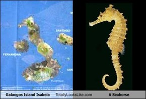 Galaogos Island Isabela Totally Looks Like A Seahorse