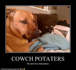 COWCH POTATERS