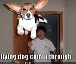 flying dog comin through