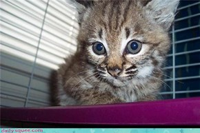 Squee Spree: Can't Resist Those Baby Blues