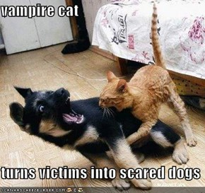 vampire cat  turns victims into scared dogs
