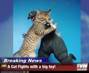 Breaking News - A Cat Fights with a big toy!
