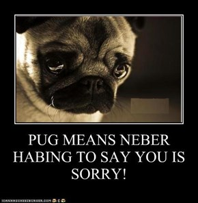 PUG MEANS NEBER HABING TO SAY YOU IS SORRY!