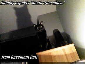 "Nobody expects ""death from above""   from Basement Cat!"