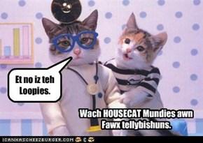 Dis weak, Housecat gibz teh payshint sum gud noozez.