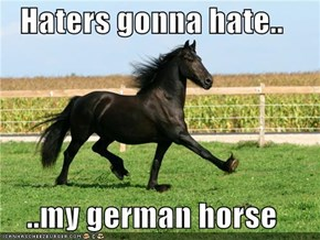 Haters gonna hate..  ..my german horse