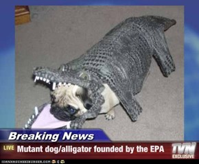 Breaking News - Mutant dog/alligator founded by the EPA