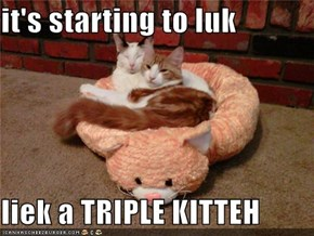 it's starting to luk  liek a TRIPLE KITTEH