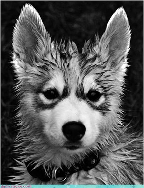 Wet and Wild Woofer Baby