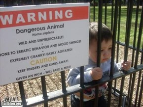 Dangerous Animal WIN