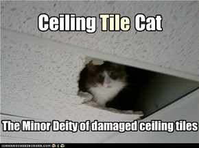 Ceiling Tile Cat...the Minor Deity of damaged ceiling tiles