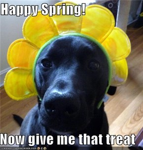 Happy Spring!  Now give me that treat