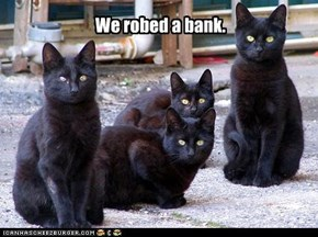 rober cats