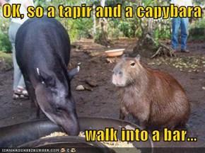 OK, so a tapir and a capybara  walk into a bar...