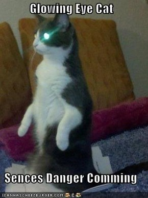 Glowing Eye Cat  Sences Danger Comming