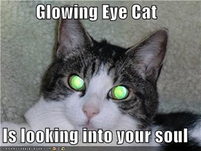 Glowing Eye Cat  Is looking into your soul