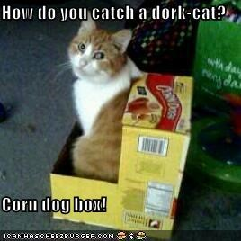 How do you catch a dork-cat?  Corn dog box!