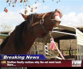Breaking News - Stallion finally realizes why the vet went back there....