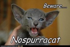 Nospurracat