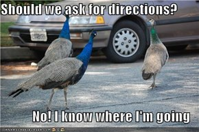 Should we ask for directions?  No! I know where I'm going