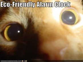 Eco-Friendly Alarm Clock