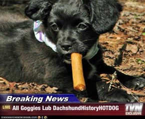 Breaking News - All Goggies Lub DachshundHistoryHOTDOG