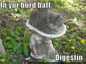 In yur burd baff  Digestin