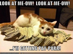 LOOK AT ME-OW!  LOOK AT ME-OW!  ...I'M GETTING PAY-PURR!