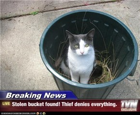 Breaking News - Stolen bucket found! Thief denies everything.