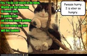 Yes, I'm da cat stuck in da twee.
